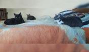 Nedílnou součástí naší domácnosti jsou ... kočky (zleva Bubák,. Mimi a Beruška) 2020